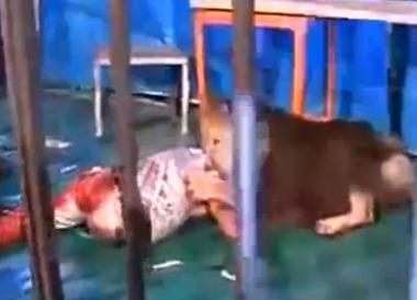 Los Ataques de Animales mas Salvajes Grabados en Video