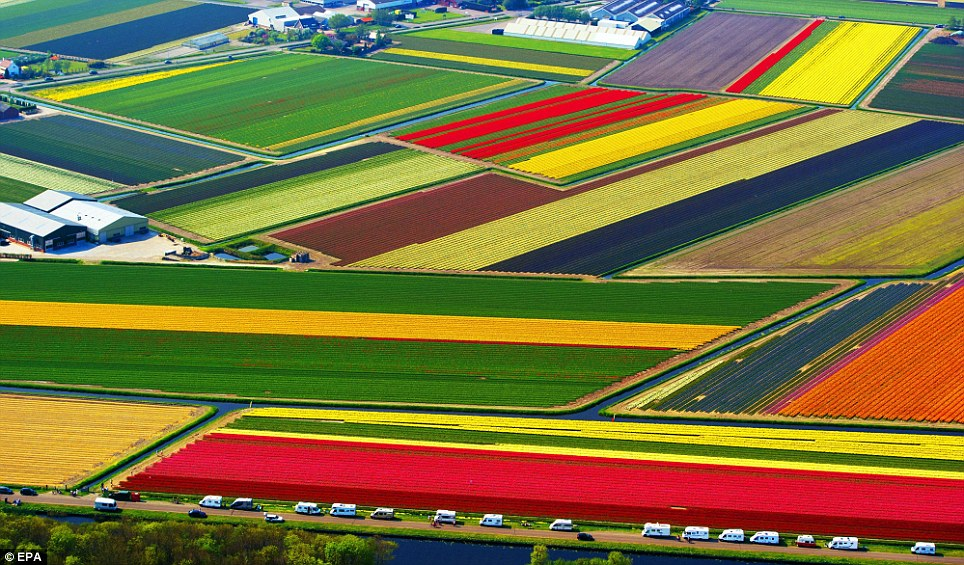 The simple beauty of nature: Tulip fields from above holland