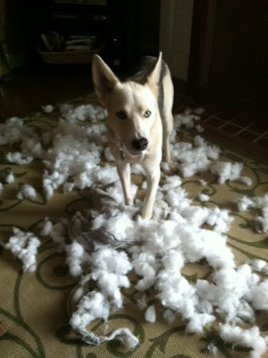 Dog shreds stuffed animal
