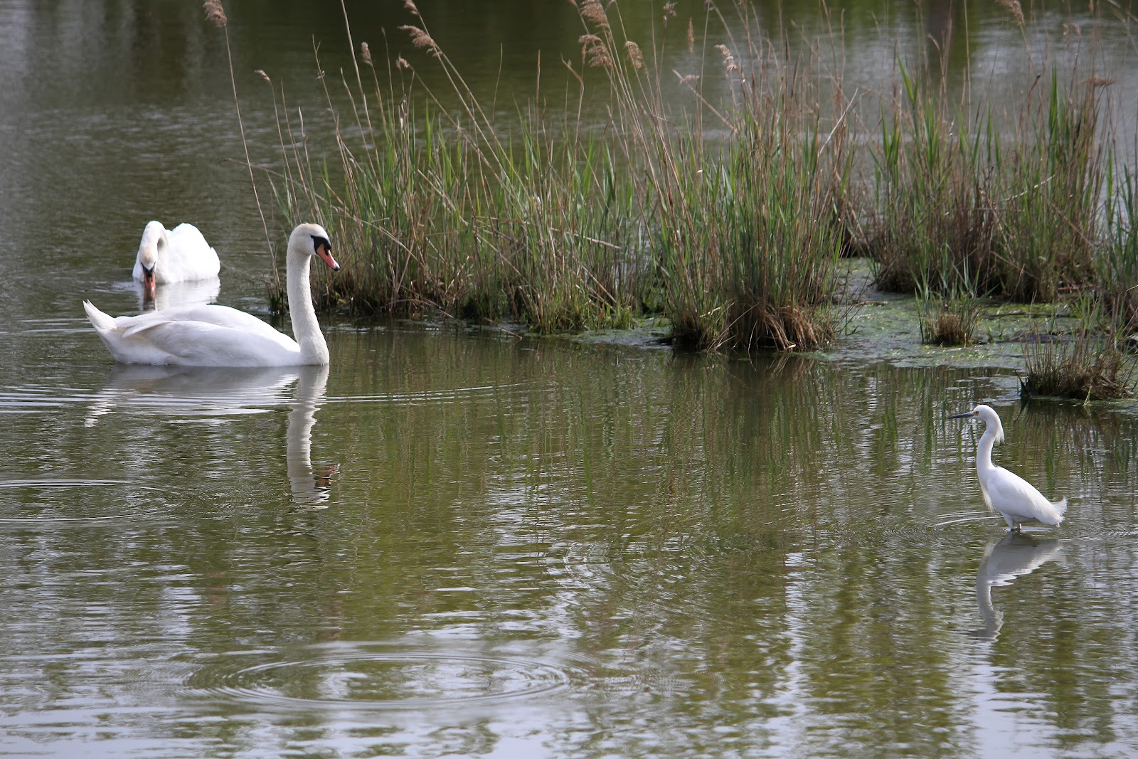 Image result for dekorte park swan