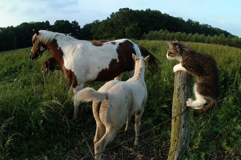 A cat on a post looking at horses in a field