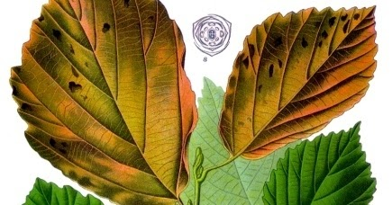 Ajedrea cosmetica natural artesanal diy4 como hacer for Como hacer tu propio astringente herbal