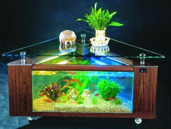 Ornamental fish aquarium for your home decoration by i for Ornamental fish tank