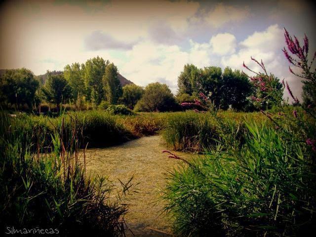El Marjal de Gandia - Entre Senill i Borró