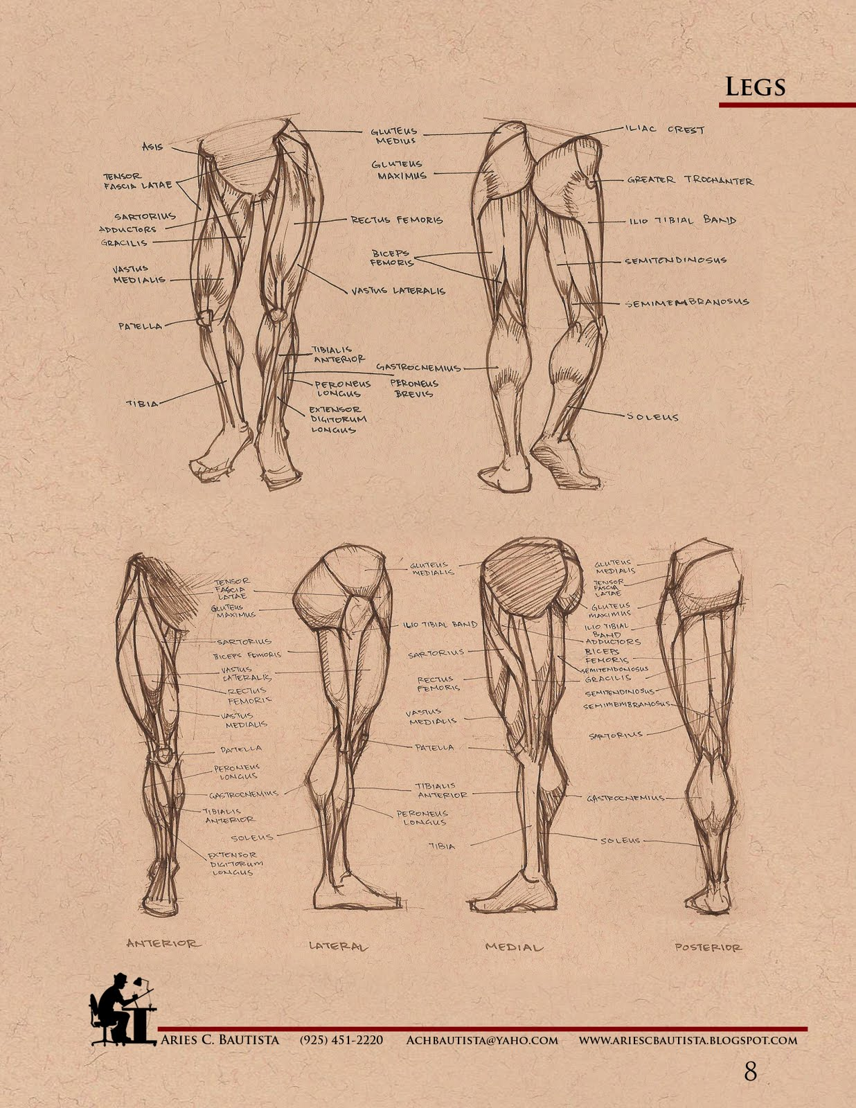 Aries C. Bautista: Comparative Anatomy Book