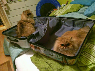 Koffer packen mit Haustieren/Packing a suitcase with pets