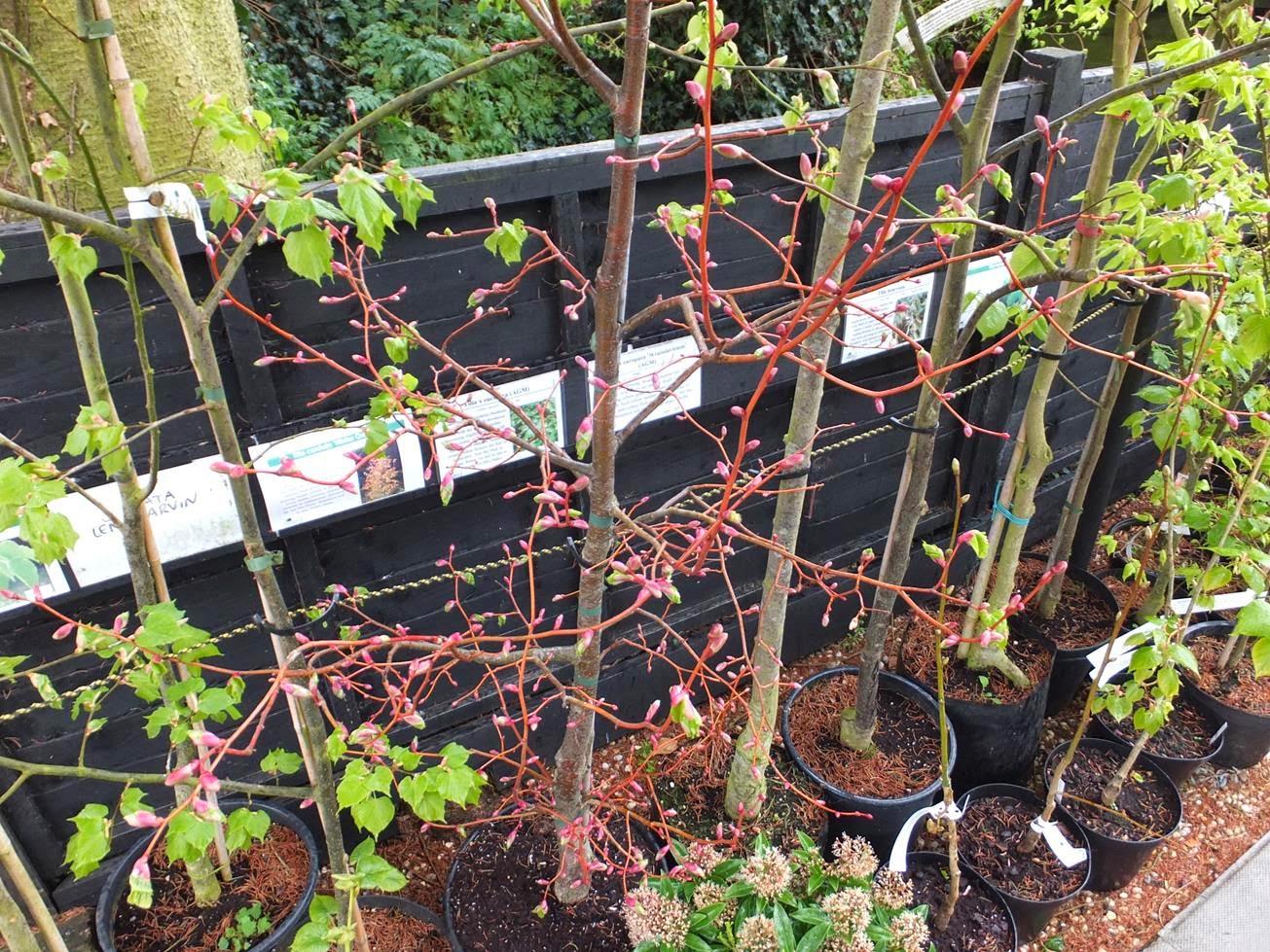alternative eden exotic garden beeches in the spring
