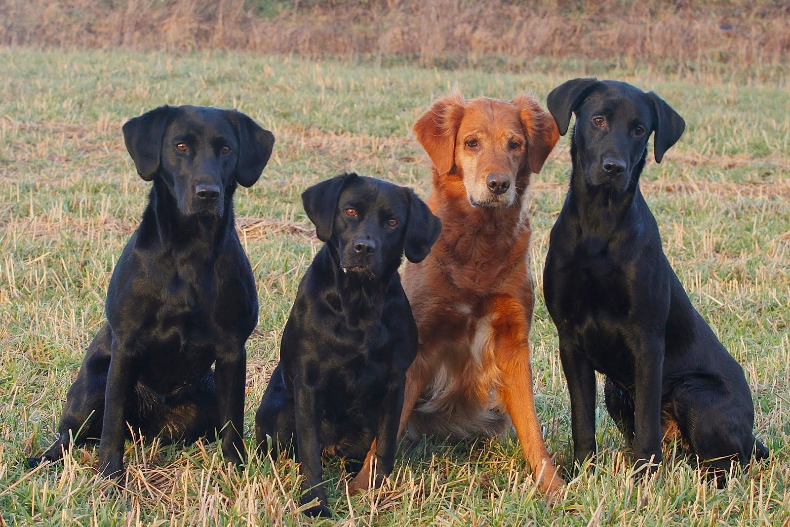 Ynni, Ida, Emma og Rudy