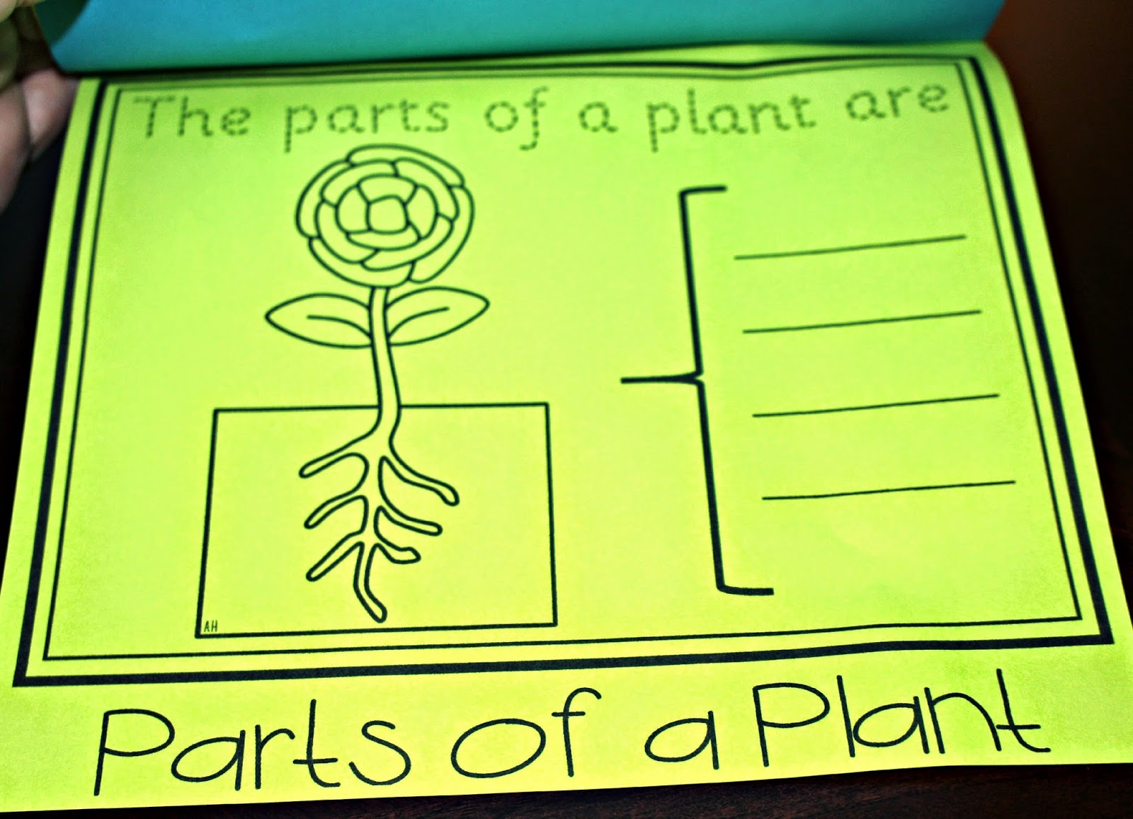 https://www.teacherspayteachers.com/Product/The-Parts-of-Plant-Flip-Up-Book-1295414