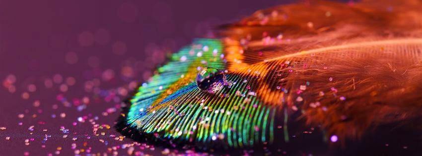 Magnifique image de couverture facebook plume