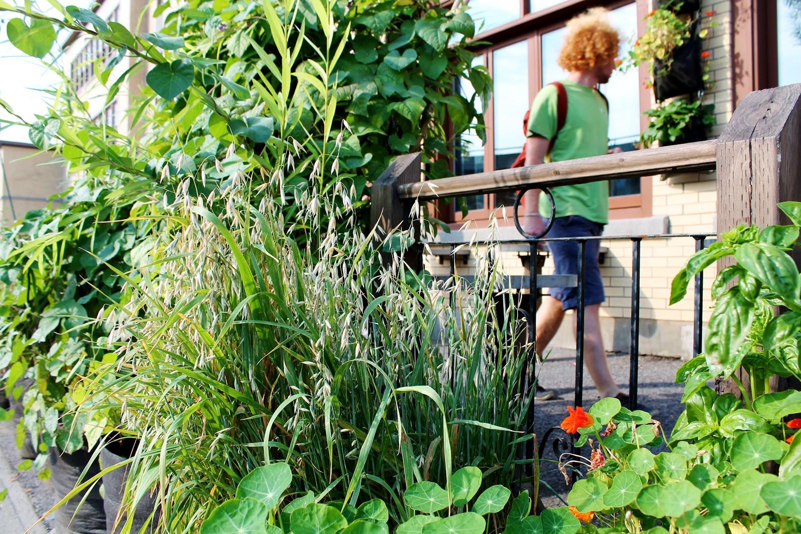 jardinage botanique associer l gumes plantes et fleurs contre les maladies et les parasites. Black Bedroom Furniture Sets. Home Design Ideas