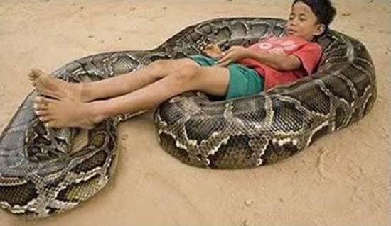 4 Δείτε:Σοκαριστικές εικόνες με παιδιά και επικίνδυνα ζώα!!!