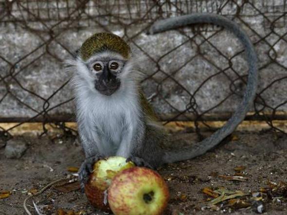Zoológico de Al-Bisan: 80 animais não resistiram, mas 20 ainda lutam pela vida