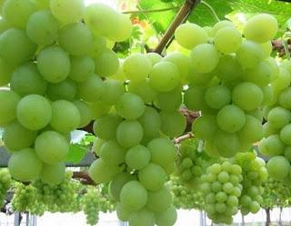 Manfaat Buah Anggur Untuk Kesehatan Tubuh-tips kesehatan alami-cara sehat alami-tips lengkap cara menjaga kesehatan secara alami