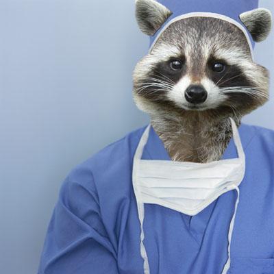 http://4.bp.blogspot.com/-z4xTNAW3drU/UdyjZeIu9JI/AAAAAAAAADc/7cAwVUy23dg/s1600/surgeon+raccoon.jpg