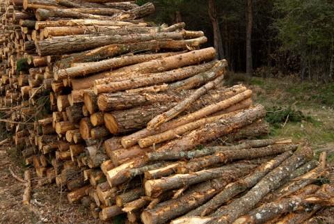 Proyecto integrado mayo 2012 - Madera de pino ...