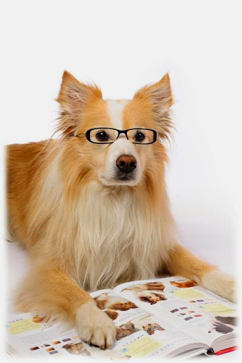 picture of a dog with glasses