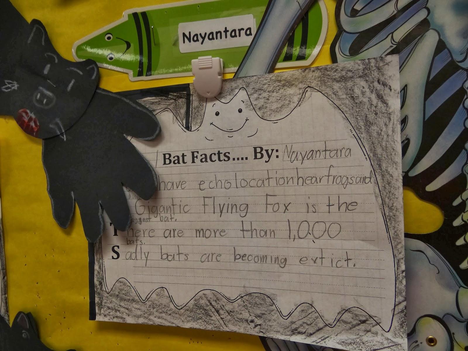 patties classroom bat acrostics and stellaluna and scarcity