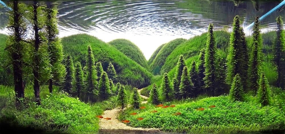 Whisper of the pines, Serkan Çetinkol. Turkey. 2013 IAPLC Top 27