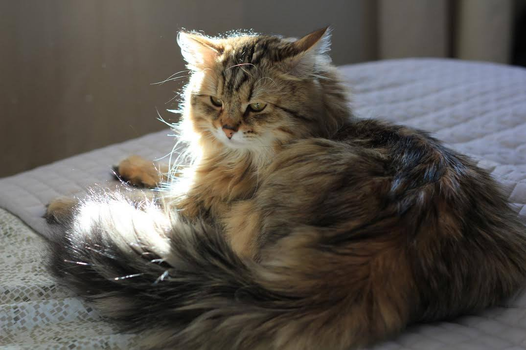 The Top 5 Cats for People with Allergies