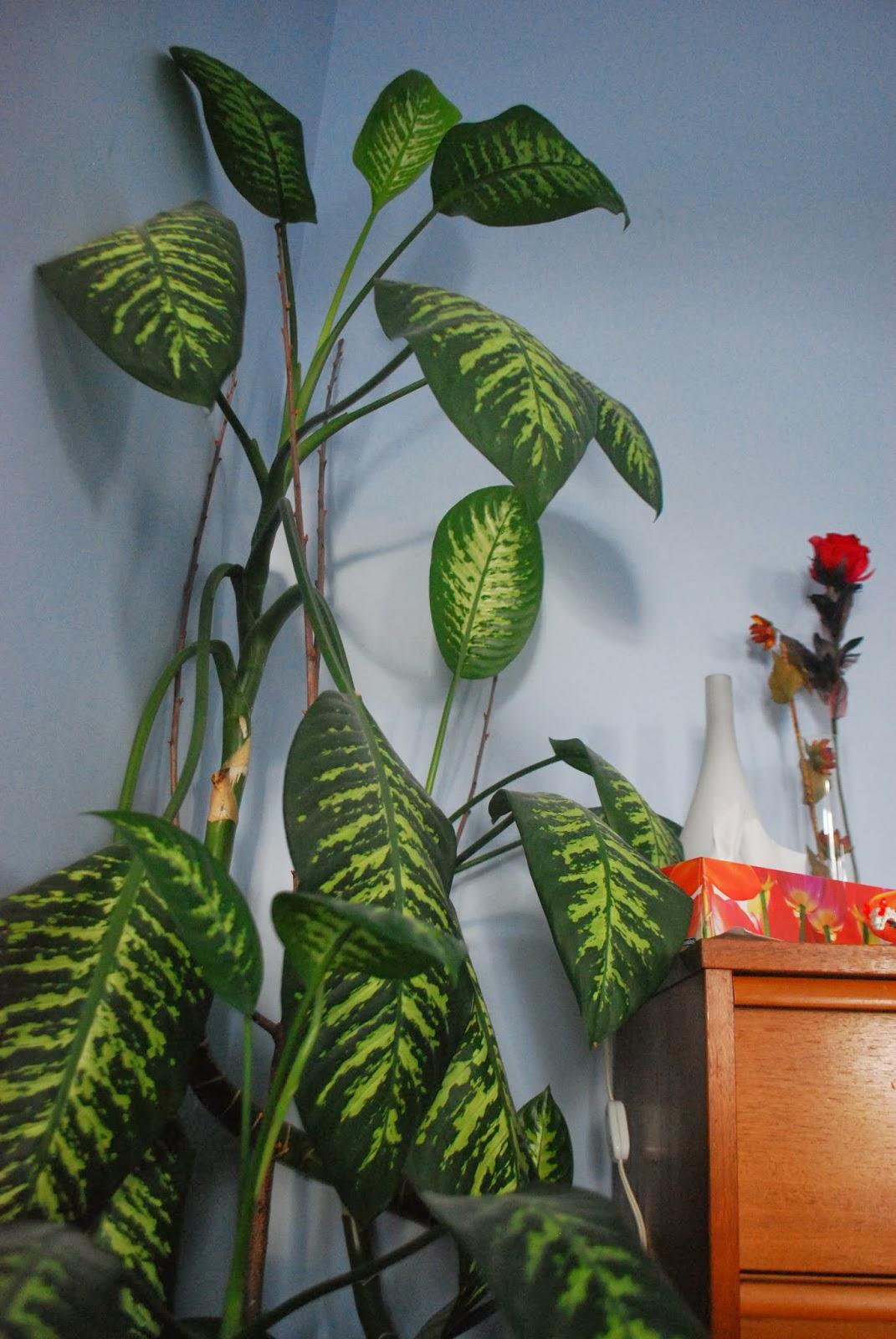 3 jardins au qu bec bienvenue au jardin d 39 hiver for Plante en ligne