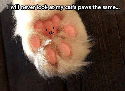 Cat paw with a little face looks like a teddy bear.
