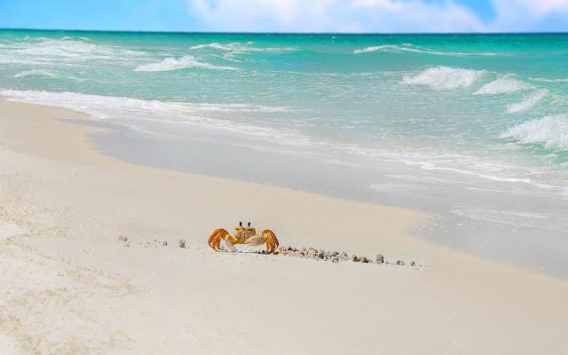 Zomerse wallpaper met strand, zee en krab op het strand