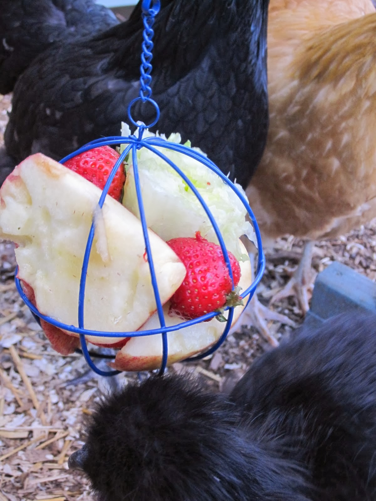 7 Winter Boredom Busters for Backyard Chickens | Tilly's Nest