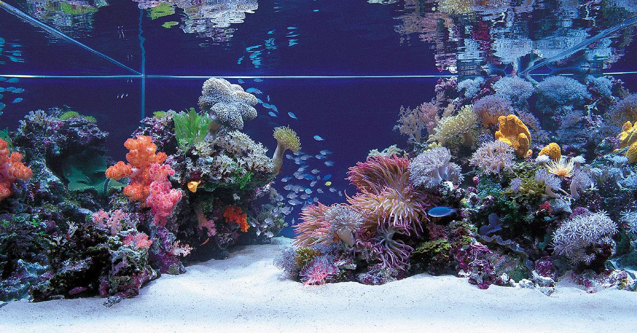 MarineAquarium ? ??????? ??????? - Reef scaping ideas