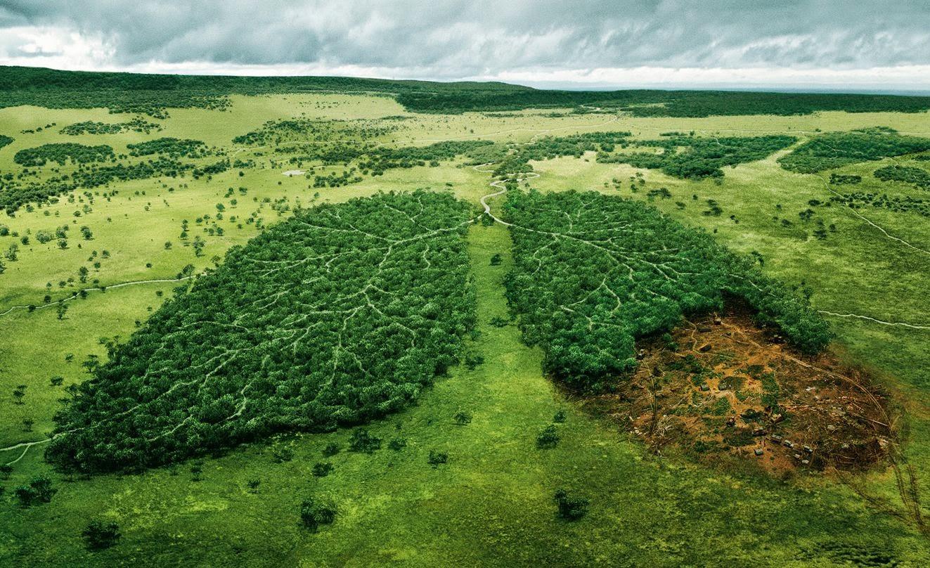 FORESTE = VITA