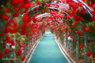 Bunga tercantik di dunia