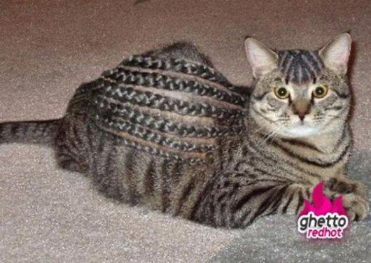 la coiffure \u0026quot; ghetto \u0026quot; pour votre petit chat