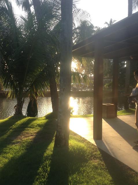 Pôr-do-sol entre palmeiras