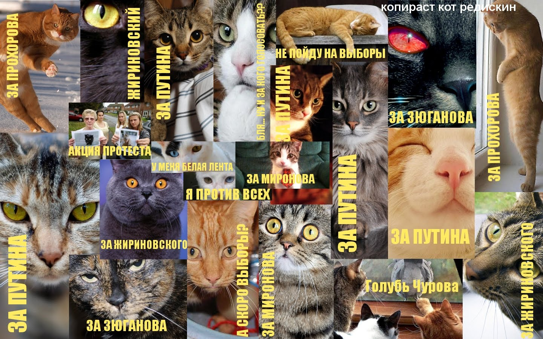 Выборы 2012: финишная прямая - картинки котов и кто как проголосует на выборах