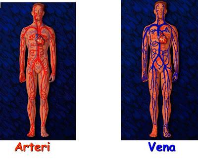 PJM3106 Anatomi dan Fisiologi : Sistem Peredaran Darah