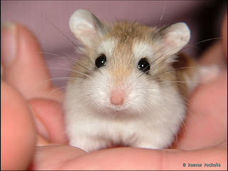 Hamster first aid kit for sale