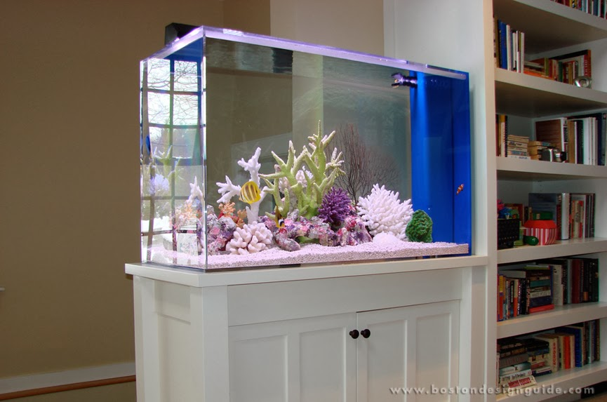 Aquariums at Home