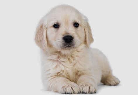 cachorro-pequeno