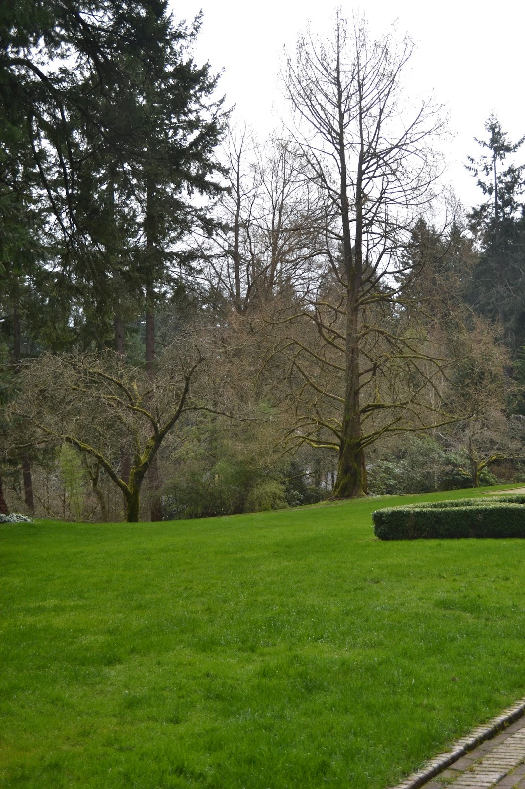 The Outlaw Gardener: Visiting Lakewold Gardens in Late Winter