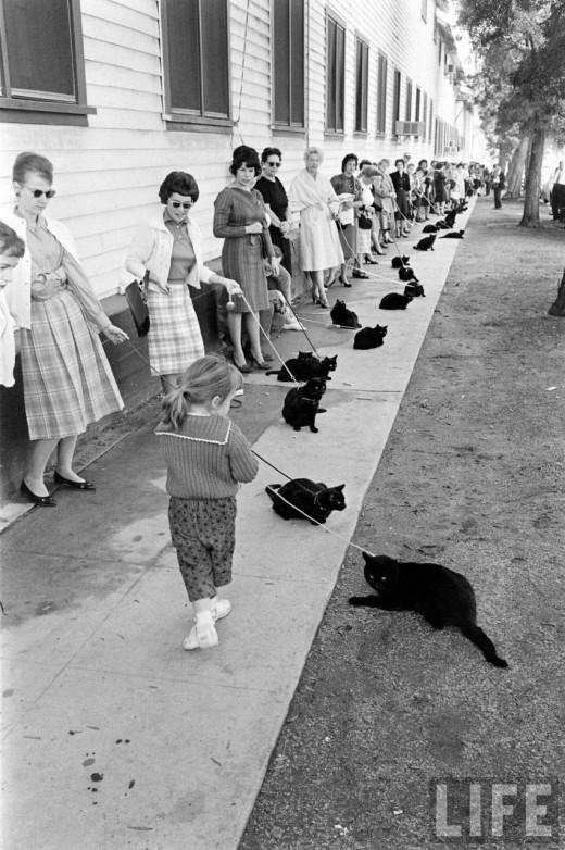 Audition Sabrina S Cat