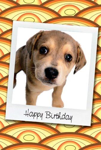 Birthday Cards Puppy Ecard
