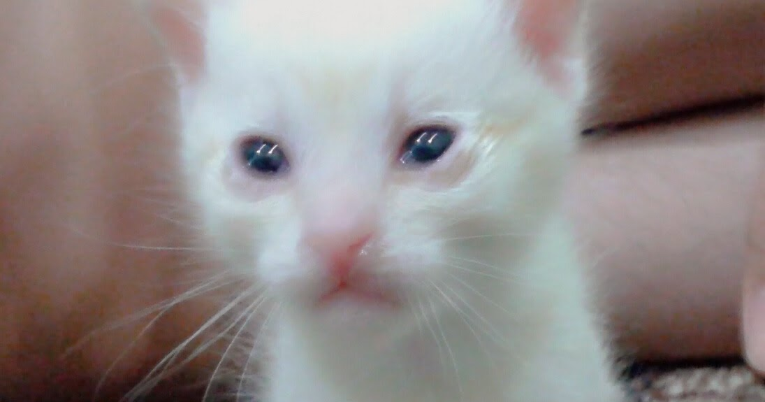 Gambar Kucing Umur 1 Tahun godean.web.id