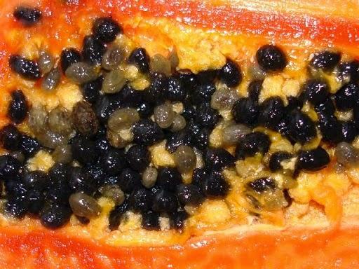 manfaat biji buah pepaya obati diare masuk angin gangguan pencernaan