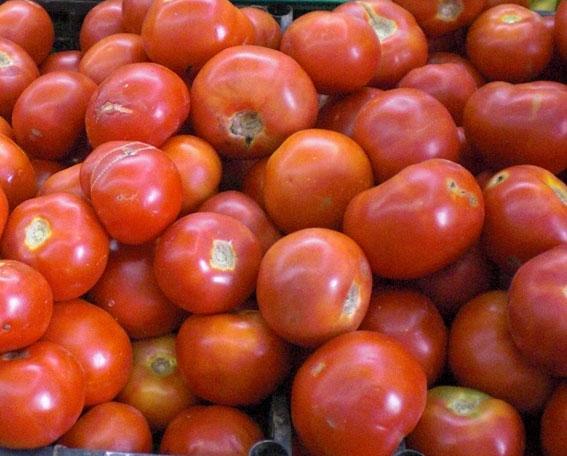 der geschmack von kreta juli ist tomaten saison zeit f r gemista. Black Bedroom Furniture Sets. Home Design Ideas