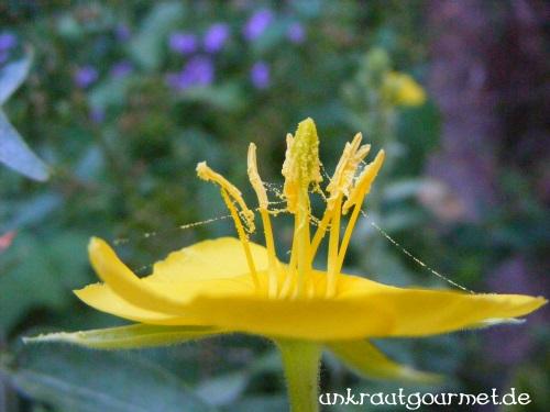 Pollen am Schnürchen