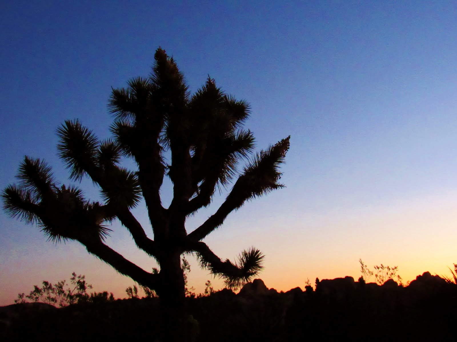 Joshua Tree Woodlands: A Tale of Sloths, Moths and the Trees that Need Them