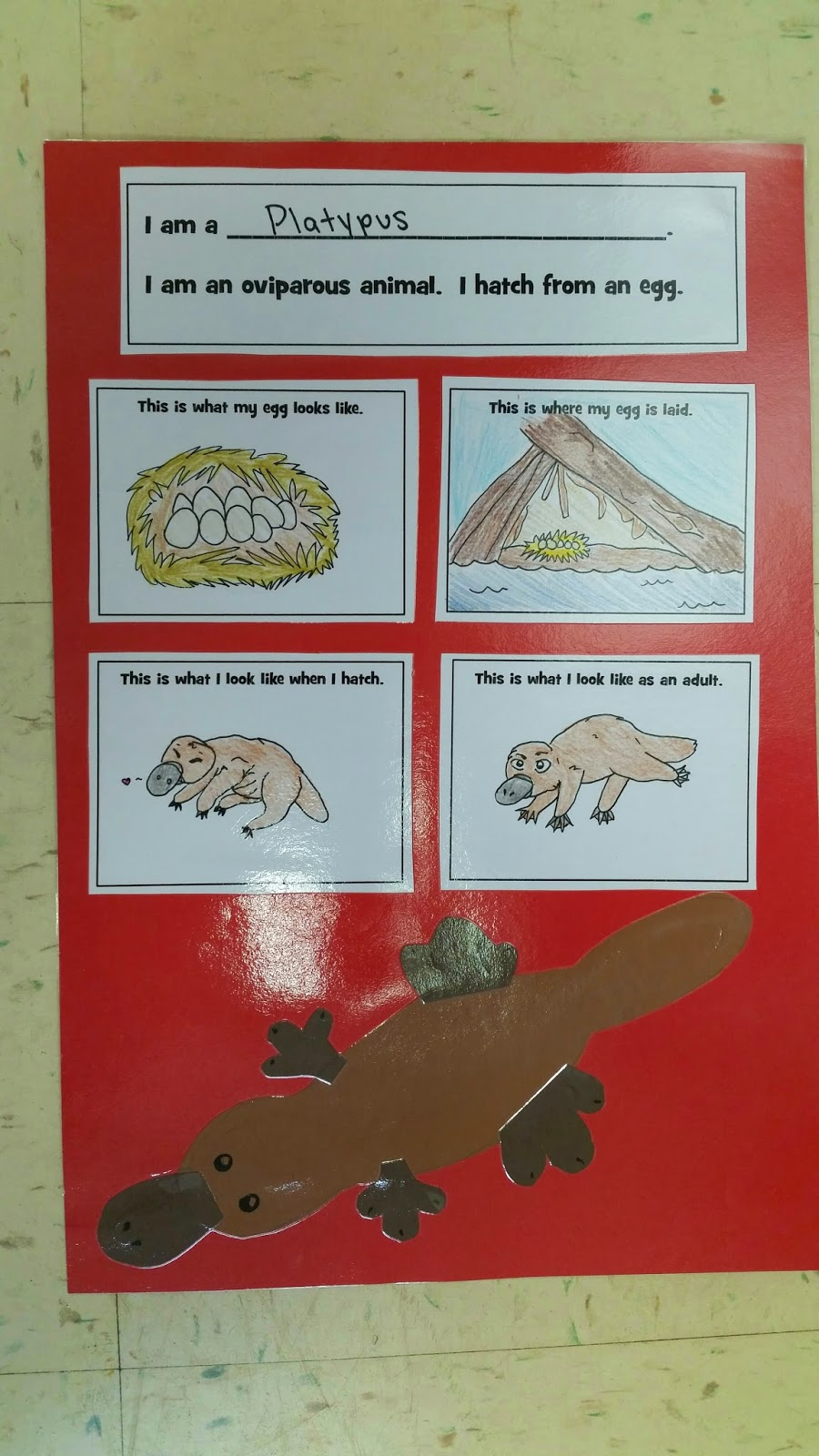 Image of: Viviparous Animals If You Teach About Oviparous Animals In Your Class And Want To Know More About This Project You Check It Out By Clicking On The Image Below Mrs Ehles Kindergarten Connections Mrs Ehles Kindergarten Connections Oviparous Animals An Egg
