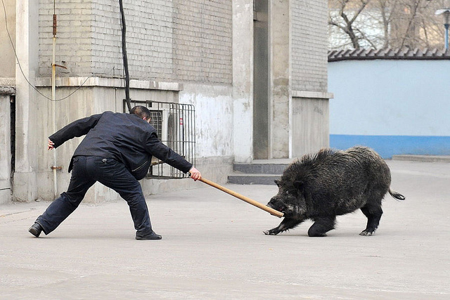 http://4.bp.blogspot.com/-z9KaQj085XQ/UFsmC7VckTI/AAAAAAAADS8/SE88uJEXMwA/s1600/boar+attack.jpg