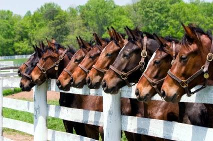 Beautiful, trail-ride horses at Big Rock Dude Ranch.