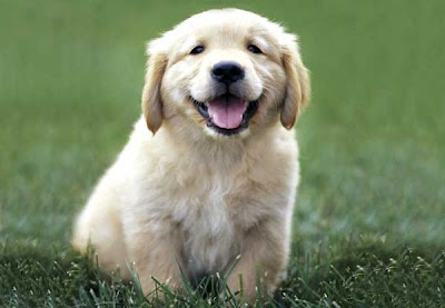 New Cute Puppy Pictures
